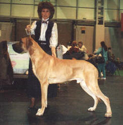 Khan at Crufts
